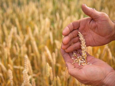Land- und Ernährungswirtschaft